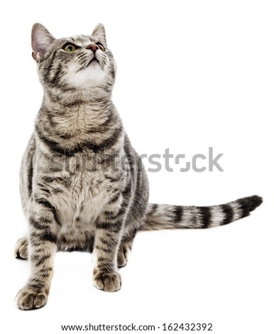 a cat isolated on white background