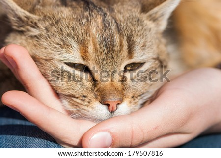 A cat keeping its head on a human hand