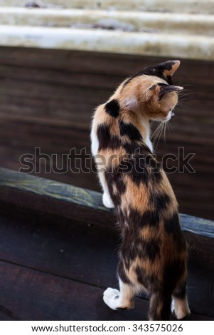 A cat looking at its prey, poor little bird - stock photo