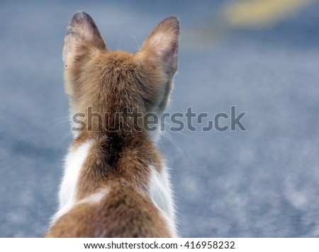 A cat looking out for its future. - stock photo