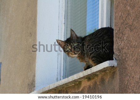 A cat on a sill - stock photo