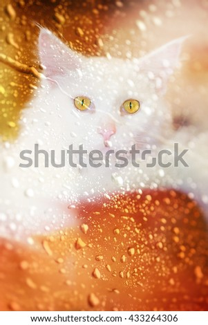 A cat on rainy day  ,view through the window with selective focus. - stock photo