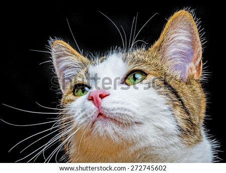 a cat portrait close up - stock photo