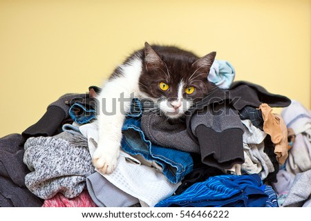 A cat relaxes on a pile of clean laundry
