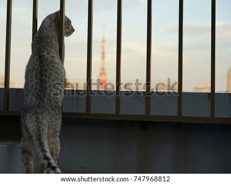 https://thumb9.shutterstock.com/display_pic_with_logo/167494286/747968812/stock-photo-a-cat-seeing-tokyo-tower-747968812.jpg