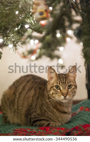 A cat sits attentively under a Christmas tree - stock photo
