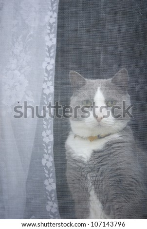 A cat sitting behind a  window, Sweden.