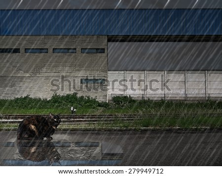 A cat sitting in the rain.  - stock photo