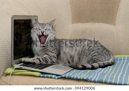 A cat sitting near the computer. Kitten at home peeping behind a computer screen, domestic kitten in natural background, cat relaxing on computer laptop. Humorous photo nice pet - stock photo