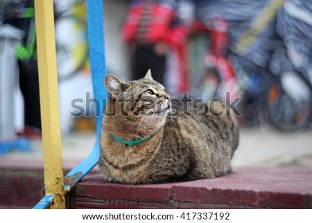 A cat sitting on the street