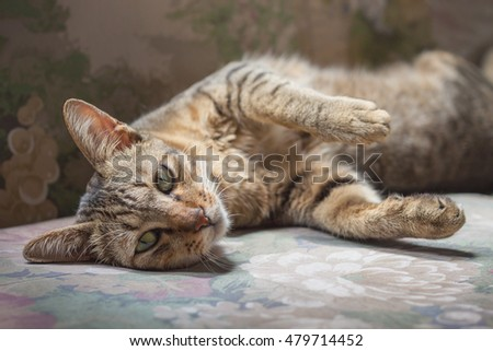 A cat sleeping on couch with sunlight