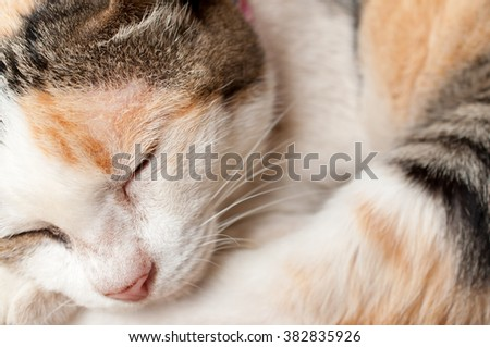 a cat sleeps on a floor, soft focus