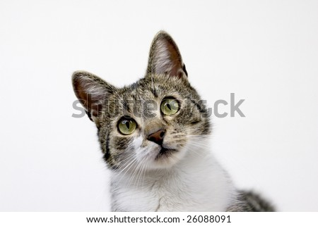 A cat with amazed look. - stock photo