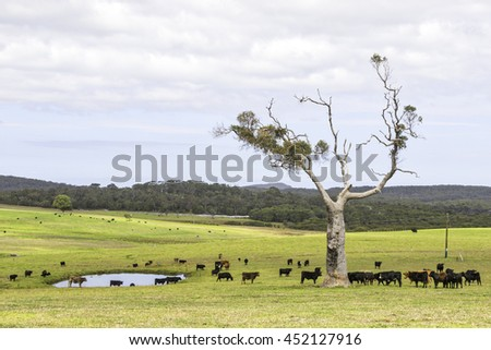 A cattle farm near the towns of Nornalup and Walpole in Western Australia. HDR image.