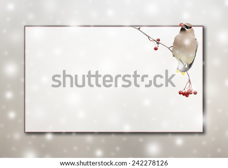 A Cedar Waxwing with red berries, falling snow, 2 color border and copy space. - stock photo
