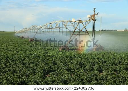 A center pivot sprinkler system used to irrigate a potato field. - stock photo