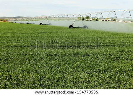 A center pivot used to irrigate a wheat field. - stock photo