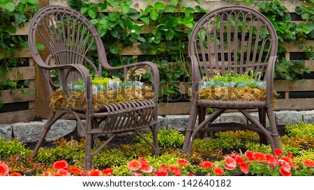 a chair used as a creative planter - stock photo