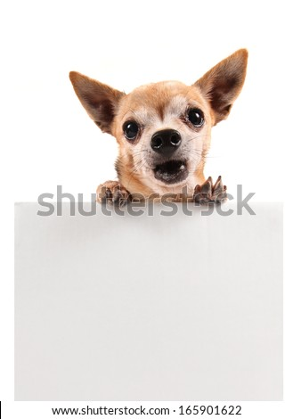 a chihuahua holding a blank sign
