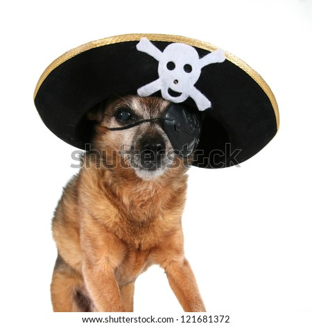 a chihuahua wearing a pirate hat and eye patch - stock photo