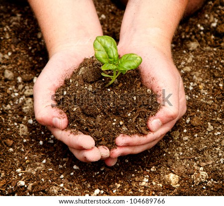 A child holding a seedling in dirt in their hands. - stock photo