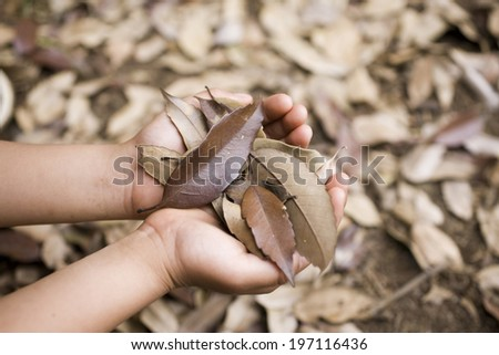 A Child'S Hands Holding Dead Leaves - stock photo