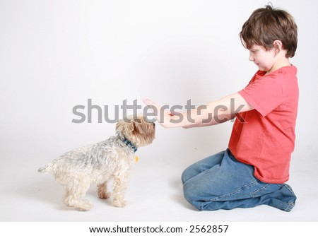 A child trying to train his new puppy - stock photo