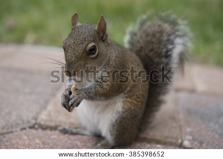 A chipmunk is eating crackers - stock photo