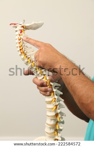 A Chiropractor showing a model of the human spine - stock photo
