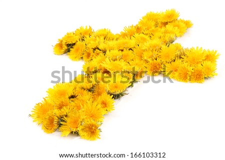 A christian cross made of many dandelion flowers against a white background. - stock photo
