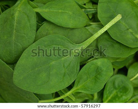 A close shot of fresh spinach leaves