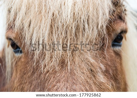 A close-up, head-on view of a horse - stock photo