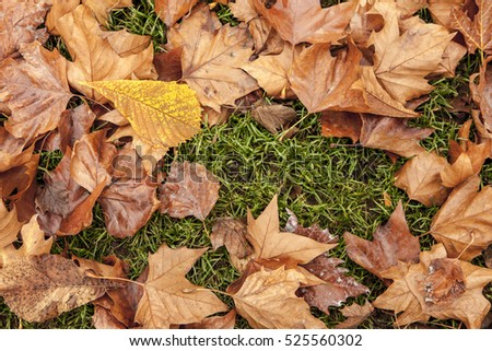 A close up image of fall leaves on the green grass.