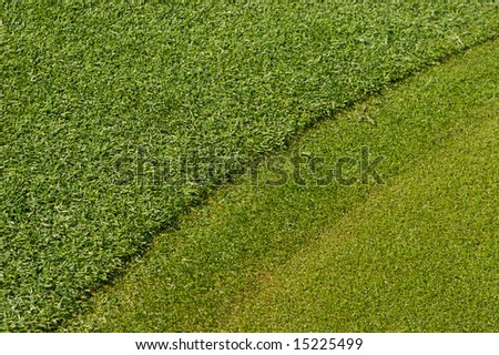 A close up image of turf grass on a golf course - stock photo