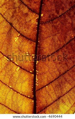 a close-up look of a red leaf texture