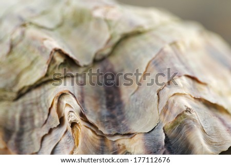 A close up macro shot of an oyster shell - stock photo