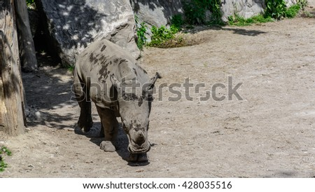 A close up of a calf rhino in natural conditions - stock photo