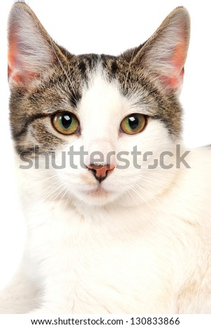 A close-up of a cat on white - stock photo