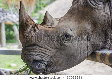 A close up of a female rhino and her calf. - stock photo