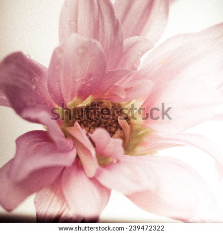 A close up of a flower with grungy vintage photography treatment. - stock photo