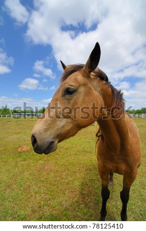 A close up of a horse on a farm