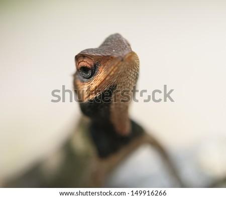 A close up of a lizard. - stock photo