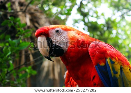 A close up of a scarlet macaw in the rainforest in Costa Rica - stock photo