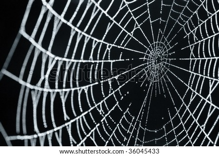 A Close-up of A Spider Web With Dew Drops