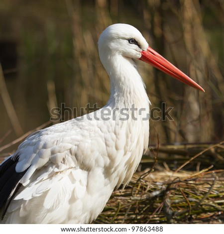 A close-up of a stork in its natural habitat