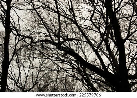 A close-up of a tree with many branches. - stock photo