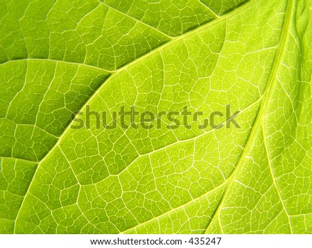 A Close up of leaf taken under bright sun - stock photo