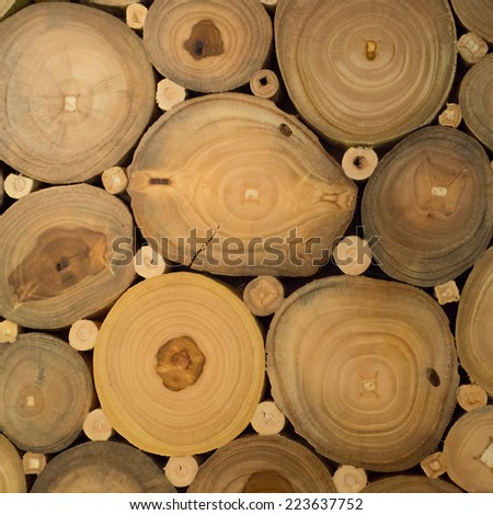 A close up of  many the cut of tree - stock photo