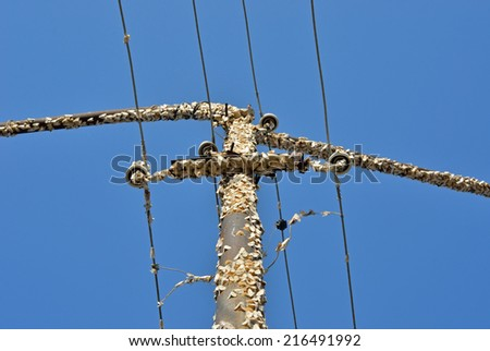 A close up of pole with gipsy moths. - stock photo