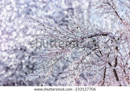 A close up of sparkling ice covered branches and twigs taken with a shallow depth of field with some sparkling bokeh effect in the background.  - stock photo